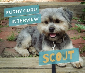 interview_scout_header